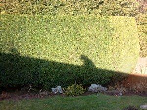 hedge cutting newport