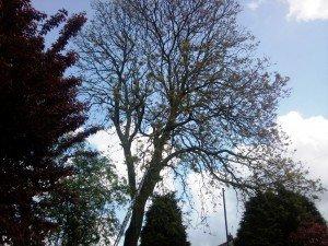 Tree Removal Newport