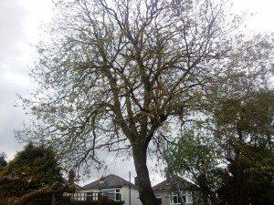 Tree Surgeon Chepstow
