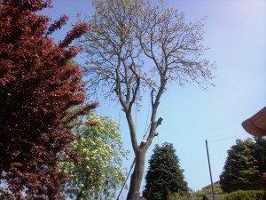 Tree Surgeon Newport