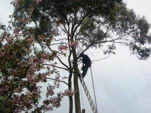 Tree Surgeon Prices Newport