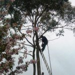 Tree Surgeon Tree Removal