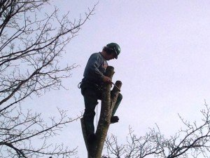 Tree Surgery Chepstow