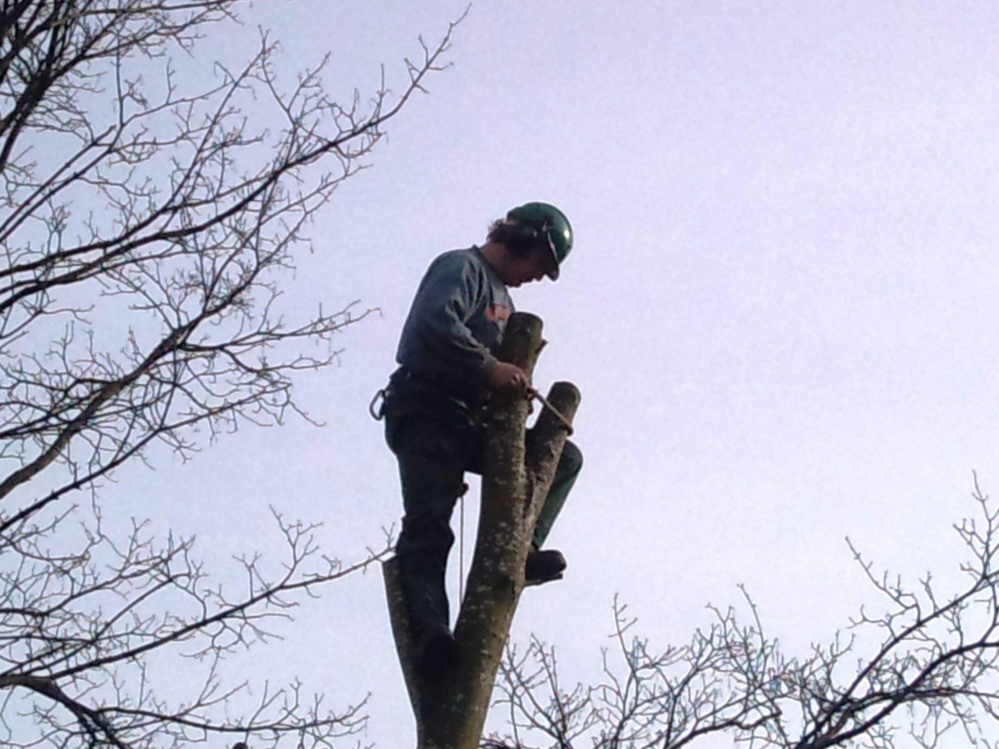 Tree-Surgery-Chepstow.jpg