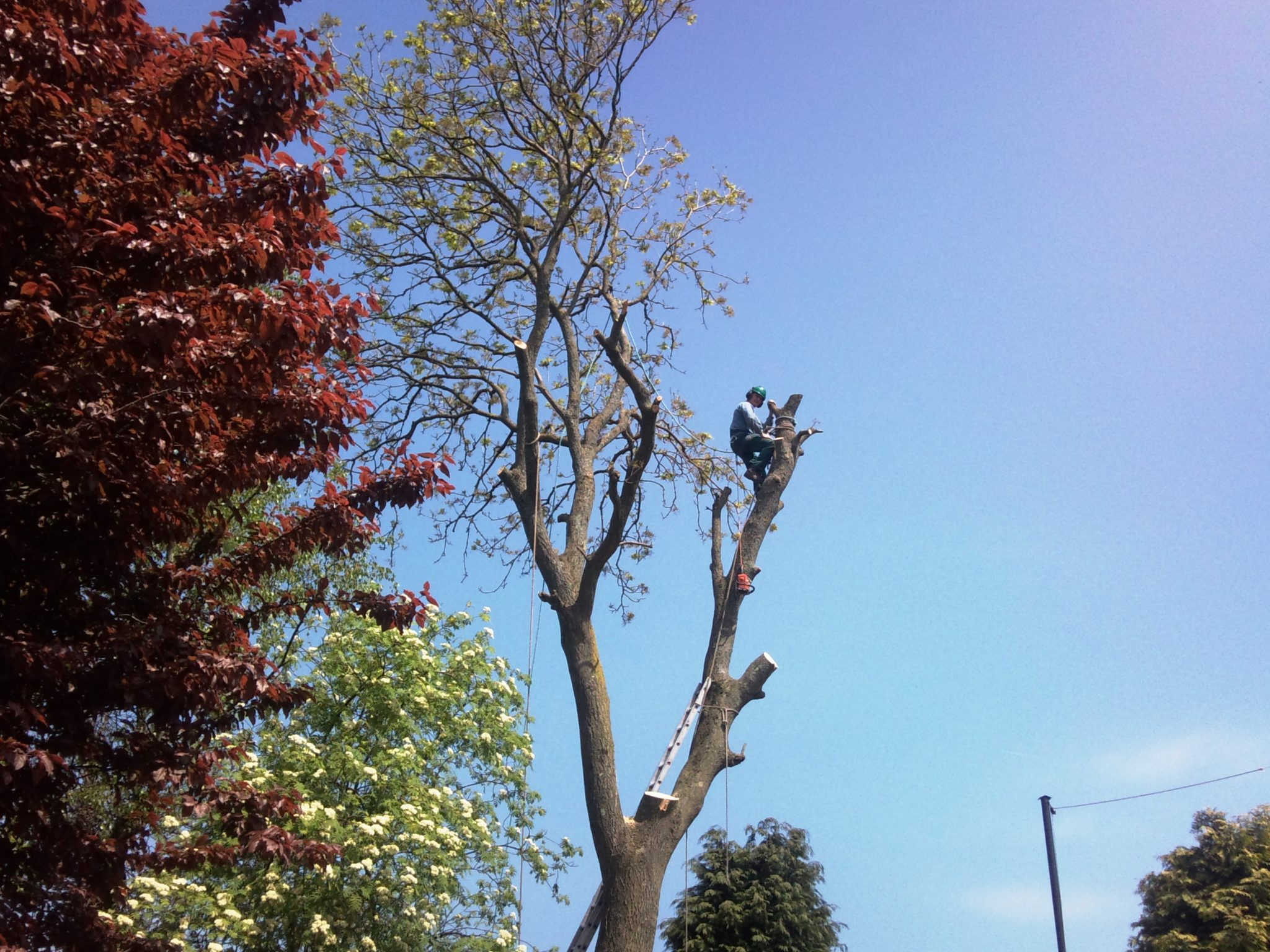 Tree Surgeon Chepstow Best Tree Surgery Chepstow Html