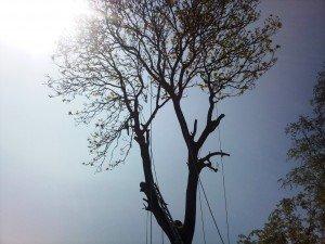 Tree Surgery UK