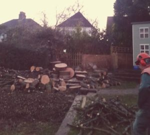 Tree Felling Newport expert tree removals