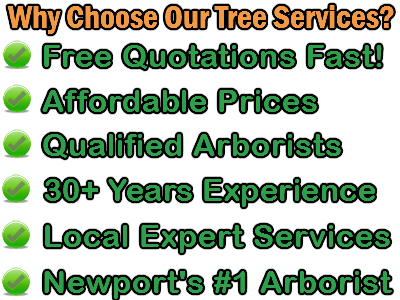 Newport Tree Services